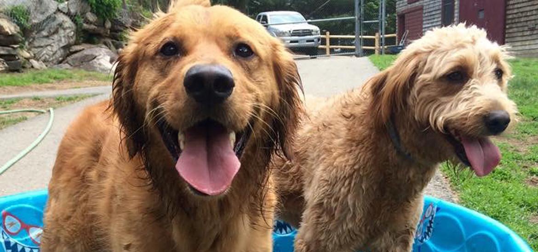 Dog & Cat Boarding – Southboro Kennels